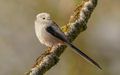 Fototapeta Mały ptak  obraz