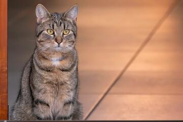 Obraz Kot siedzi w drzwiach - fototapety do salonu