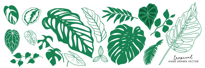 Obraz Tropical leaves collection. Vector isolated elements on the white background. summer clipart - fototapety do salonu