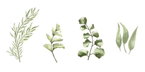 Fototapeta Vector set botanical elements - wildflowers, herbs and wild foliage obraz
