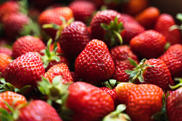 Strawberry top view background. Summer food pattern. Raw fresh farming berries. Healthy eating...