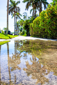 Hollywood, Florida in North Miami Beach with sidewalk in neighborhood with reflection in puddle water of palm trees and sky vertical low angle view