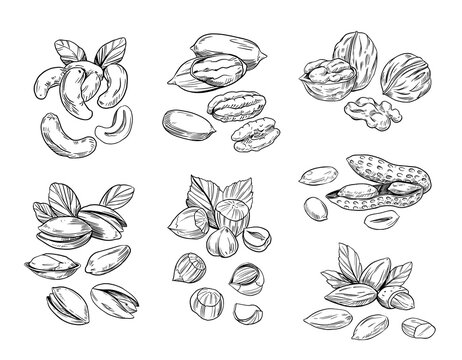 Hand drawn sketch style nuts. Pistachio, almond, walnut, pecan, cashew, hazelnut, macadamia and brazilian nut. Vector doodle illustrations. Black outline isolated