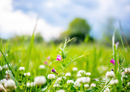 Spring or summer nature background with green grass and wildflowers