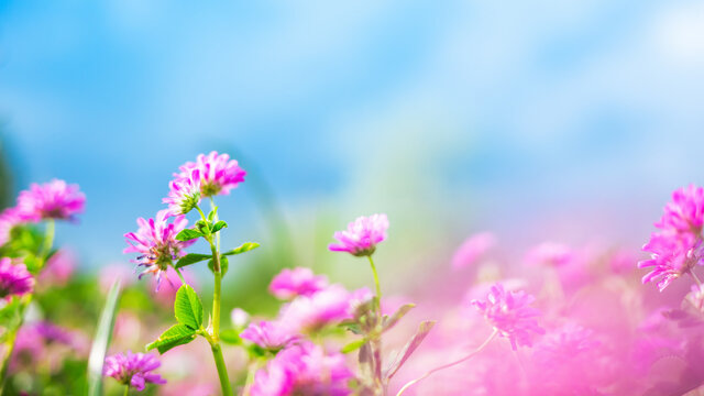 Spring or summer nature background with green grass, wildflowers and blue sky