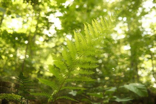 Grünes Farn Blatt im frischen Wald