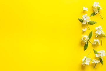 Obraz Top view of blossom jasmine flowers. Floral pattern flat lay - fototapety do salonu