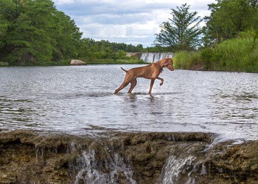 Bird Dog Fishing