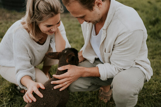 Couple petting a young baby lamb on a farm
