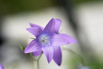 un bel gruppo di fiori di montagna colorati, la bellezza della nature e dei suoi colori, la particolare flora che si può trovare in montagna