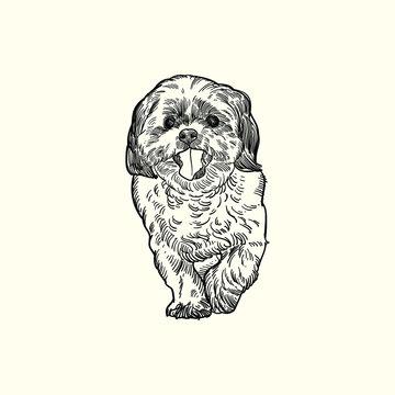 Vintage hand drawn sketch shih tzu yorkie terrier dog