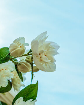 A white flower blossom with light blue sky in the background