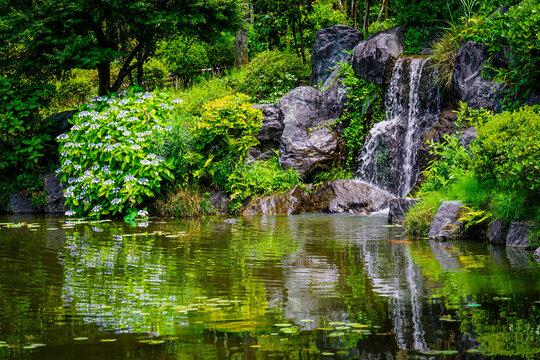 紫陽花が咲く彩翔亭のお庭、航空記念公園(埼玉県所沢市)の日本庭園