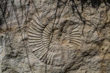 Obraz Possil ammonite in Ojcowski National Park, Poland - fototapety do salonu