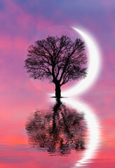Silhouette of lone tree with crescent moon at sunset