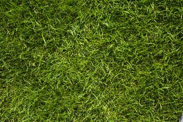 Obraz Trawa w ogrodzie, tekstura - fototapety do salonu