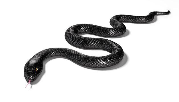 Black Snake isolated on White Background. 3D illustration
