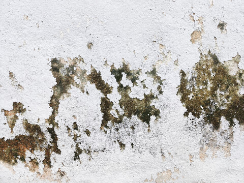 Close-up view of the moss and peeling painted white from the wall.