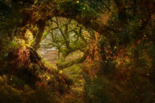 magic forest - Zauberwald