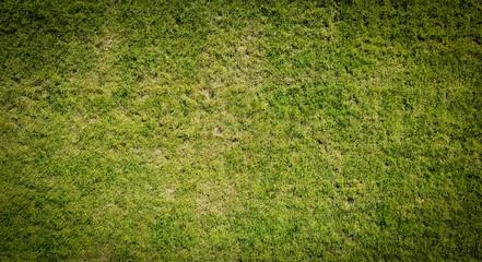 Football grass texture closeup