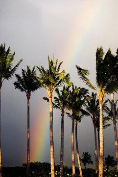 Brilliant Rainbow Across the Sky in Maui Hawaii