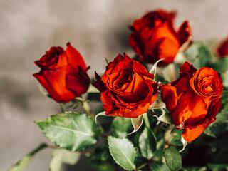 Obraz Bukiet, róże - fototapety do salonu