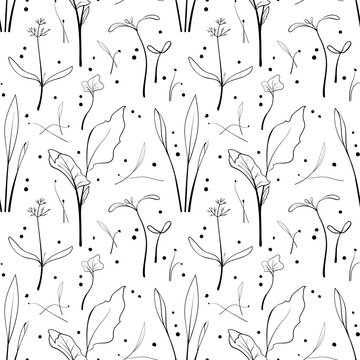 Seamless pattern with corn, dill, kale sprouts background. Sketch microgreen seeds vector illustration.