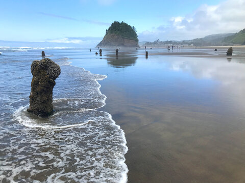 Along the Oregon Coast: Neskowin Ghost Forest - remains of ancient sitka spruce trees sunk under the water after an earthquake 2000 years ago.