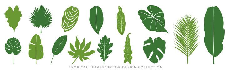 Fototapeta Tropical leaves vector set. Palm leaf, coconut leaf, banana leaves, monstera, fern, Botanical and Jungle leaves design for nature background, Eco and summer banner, wallpaper, pattern and prints. obraz
