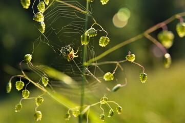Pajęczyna z pająkiem