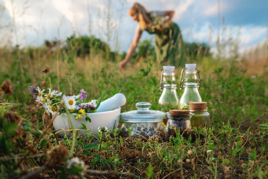 The woman collects medicinal herbs. Selective focus.