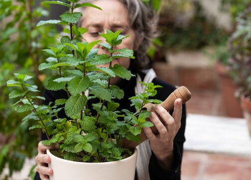 Senior woman caring about potted plant in garden