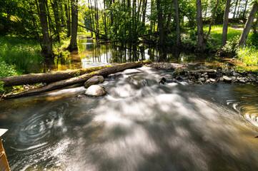 Obraz Drawieński Park Narodowy - fototapety do salonu