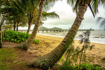 Leaning palms in Palm Cove, Queensland, Australia