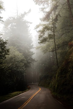 Majestic empty road in dark mysterious forest in fog