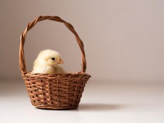 Fototapeta Wielkanocny kurczak w koszyku obraz