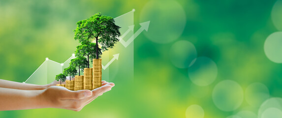 Businessman hand holding step of coins stacks with tree growing on top in nature green background. Money saving, investment, family planning, money growth, business success Concept.