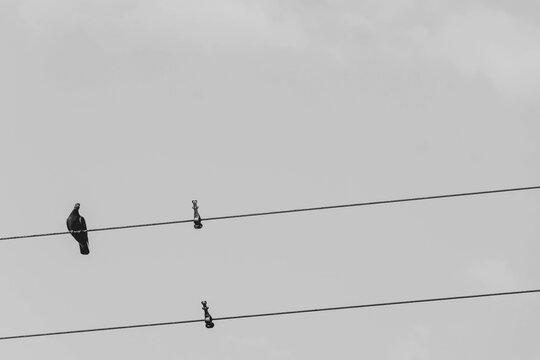 電線に停まる鳥