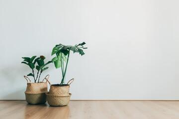Fototapeta Indoor plants in living room white background obraz
