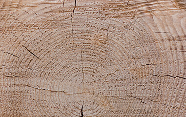 Wood log background and texture