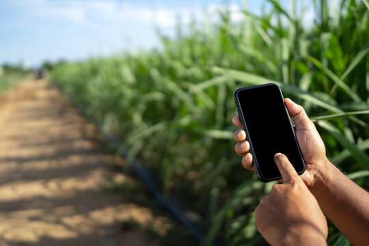 The farmer holds a smartphone and touches the screen to connect the intelligent management system within the farm. Modern farmers research and market information online.