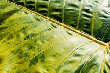 Beautiful leaf detailing