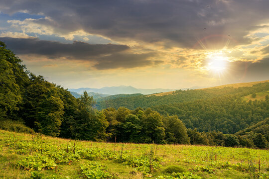 countryside landscape in mountains at sunset. green meadow under dramatic sky in evening light. trees on the hill