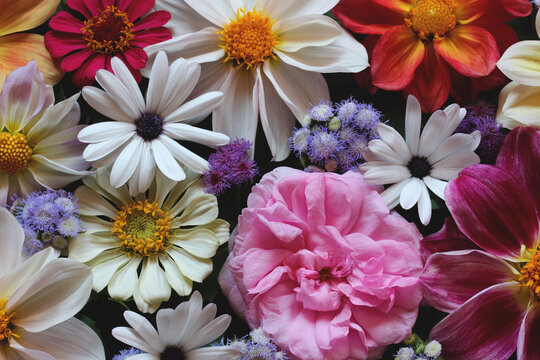 beautiful floral background, top view.