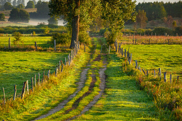 A field road between pastures and meadows at sunrise near the village of Gamerki Wielkie in Warmia and Mazury in Poland