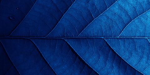 Fototapeta Blue oak leaf in macro with shadows. obraz
