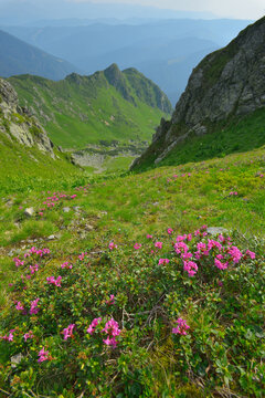 Nature in Carpathian Mountains