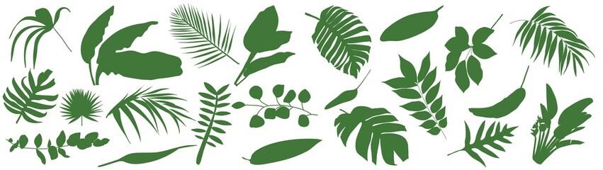 Fototapeta Set of Tropical leaves. Vector illustration of various green foliage isolated on white. Design element for poster, menu, flyer, banner, menu, package. obraz