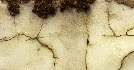 Obraz Tekstura szaro zielono, tło z dodatkiem rośliny. Struktura starego muru z pęknięciami, rysy. - fototapety do salonu