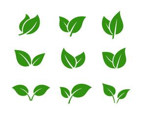 Fototapeta Green leaves set. Tree leaf. Spring, summer, autumn. Color eco icon logo. Ecology nature.  obraz